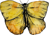 yellow_butterfly_nosig